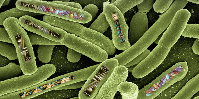 Collage: E-coli bacteria with factories and products inside
